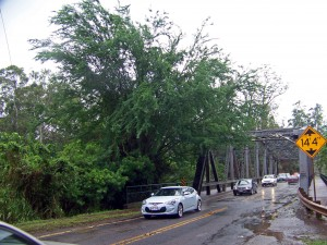 Limbs from trees hang over Kamehameha Highway and the Karsten Thot Bride